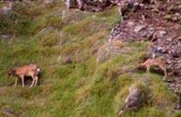 野生の鹿がお出迎え♪